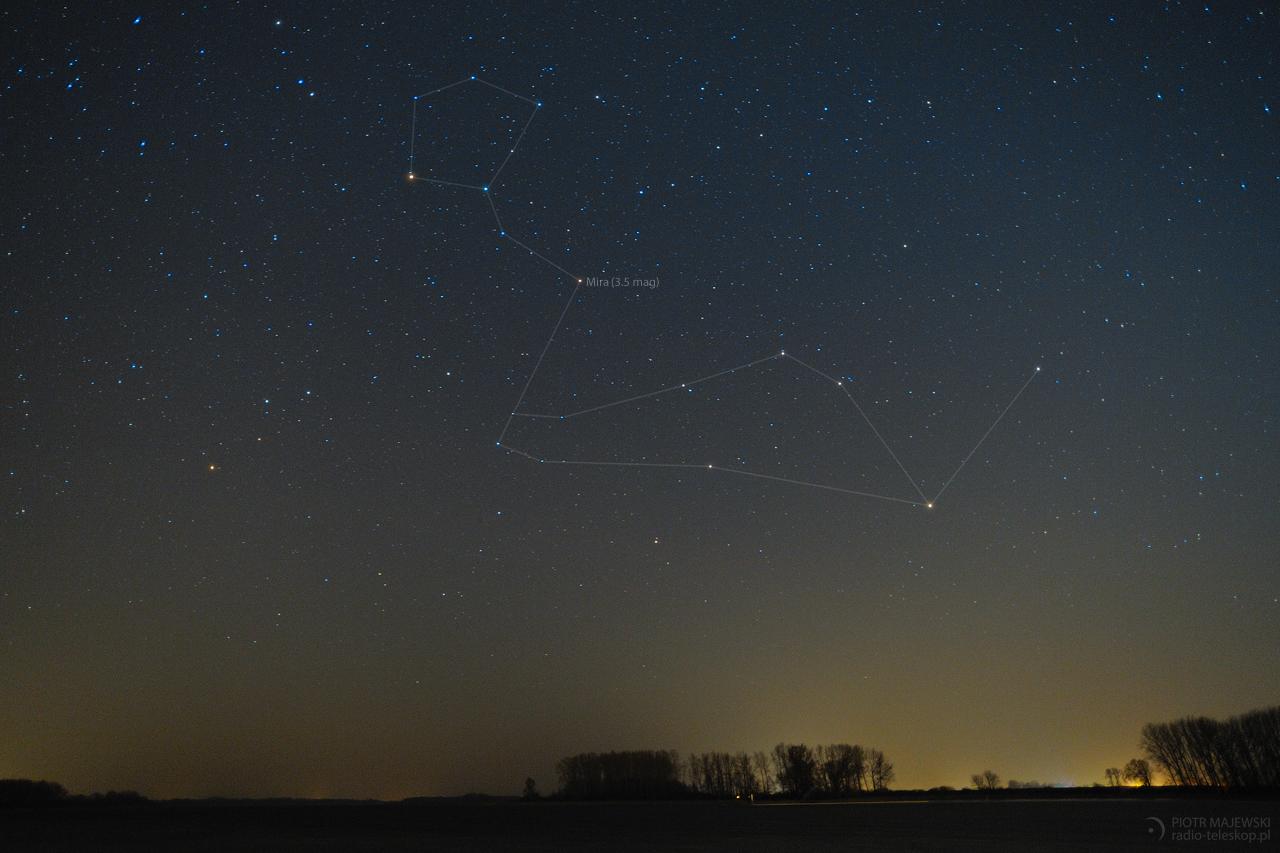 W BRZUCHU WIELORYBA. Mira Ceti w gwiazdozbiorze Wieloryba 15 stycznia 2018 roku.
